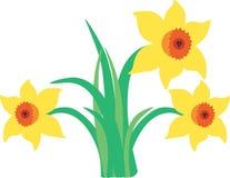 Άνοιξη daffodils Στοκ φωτογραφίες με δικαίωμα ελεύθερης χρήσης