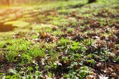 Άνοιξη Defocus ή υπόβαθρο θερινής αφηρημένο φύσης με τη χλόη στο λιβάδι στοκ φωτογραφία με δικαίωμα ελεύθερης χρήσης