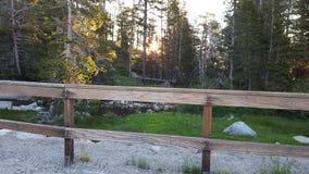 Άνοδος ήλιων στα ξύλα Στοκ Εικόνες