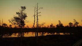 Άνοδος φεγγαριών πέρα από τη δασική λίμνη Στοκ φωτογραφίες με δικαίωμα ελεύθερης χρήσης