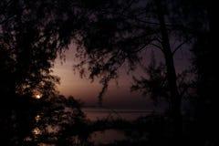 Άνοδος φεγγαριών στην τροπική όχθη της λίμνης μεταξύ των δέντρων Στοκ Εικόνα
