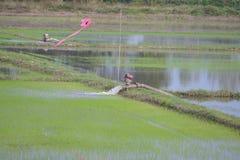 Άντληση νερού στο γεωργικό τομέα στοκ φωτογραφίες