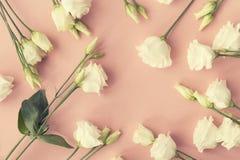 Άνωθεν άσπρο πλαίσιο τριαντάφυλλων Στοκ φωτογραφίες με δικαίωμα ελεύθερης χρήσης