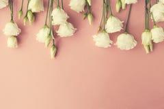 Άνωθεν άσπρο πλαίσιο τριαντάφυλλων Στοκ Φωτογραφίες