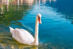 Άνω Αυστρία Hallstatt Στοκ Φωτογραφίες