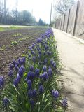 Άπειρη γραμμή λουλουδιών Στοκ φωτογραφία με δικαίωμα ελεύθερης χρήσης