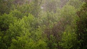 Άποψη άνωθεν, πάρκο πόλεων, ημέρα άνοιξη, καταιγίδα στην πόλη, ισχυρός άνεμος και βροχή, μια νεροποντή με το χαλάζι εστίαση σε με απόθεμα βίντεο