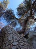 Άποψη δέντρων Στοκ φωτογραφία με δικαίωμα ελεύθερης χρήσης