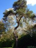 Άποψη δέντρων Στοκ Εικόνα