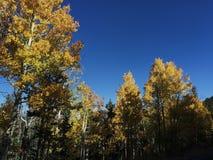 Άποψη δέντρων Autum Στοκ Εικόνες