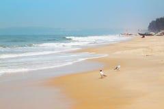 Άποψη ακτών με το ζεύγος Seagulls Στοκ Εικόνες