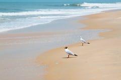 Άποψη ακτών με το ζεύγος Seagulls Στοκ φωτογραφίες με δικαίωμα ελεύθερης χρήσης