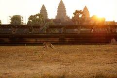 Άποψη ανατολής πέρα από το ναό Angkor Wat Στοκ Εικόνες