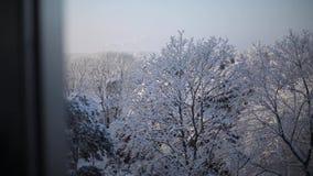 Άποψη από ένα παράθυρο στα δέντρα στο χιόνι απόθεμα βίντεο