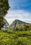 Άποψη από την αιχμή του μικρού Adam στη Ella στη Σρι Λάνκα στοκ φωτογραφία με δικαίωμα ελεύθερης χρήσης