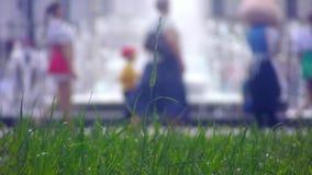 Άποψη από την πηγή χορτοταπήτων ευθεία απόθεμα βίντεο