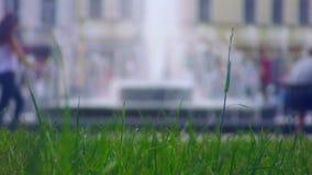 Άποψη από την πηγή χορτοταπήτων ευθεία φιλμ μικρού μήκους