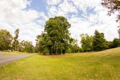 Άποψη από τους κήπους Kew, βασιλικοί βοτανικοί κήποι στο Λονδίνο στοκ φωτογραφία με δικαίωμα ελεύθερης χρήσης