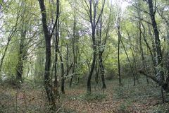 Άποψη από το ξύλο, φθινόπωρο δέντρων στοκ εικόνες