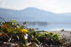 Άποψη βουνών Στοκ φωτογραφία με δικαίωμα ελεύθερης χρήσης