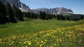 Άποψη βράσης Sass Ciampac Ciampatsch με ένα πρώτο πλάνο του europaeus Trollius wildflowers globeflower στους δολομίτες απόθεμα βίντεο