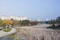 Άποψη για βαθύτερο ημερησίως απογεύματος φθινοπώρου με μαραμένο bulrush στοκ φωτογραφία με δικαίωμα ελεύθερης χρήσης