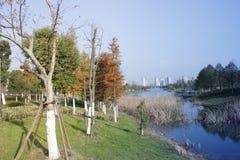 Άποψη για βαθύτερο ημερησίως απογεύματος φθινοπώρου με μαραμένο bulrush στοκ εικόνες