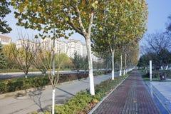 Άποψη για βαθύτερο ημερησίως απογεύματος φθινοπώρου με το πεσμένο δέντρο του Phoenix στοκ φωτογραφίες
