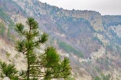 Άποψη δύσκολο mountainside και το τοπ δέντρο πεύκων Στοκ φωτογραφία με δικαίωμα ελεύθερης χρήσης