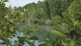 Άποψη ενός συνόλου λιμνών την άνοιξη των επιπλεουσών λευκών pappuses φιλμ μικρού μήκους