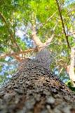 Άποψη επάνω του δέντρου από κάτω από στην επιλεγμένη εστίαση Στοκ φωτογραφία με δικαίωμα ελεύθερης χρήσης