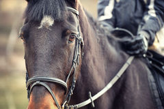 Άποψη λεπτομέρειας του αλόγου και του ιππέα Στοκ Εικόνες