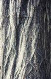 Άποψη λεπτομέρειας του φλοιού δέντρων Στοκ εικόνες με δικαίωμα ελεύθερης χρήσης
