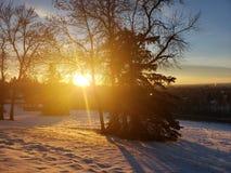 Άποψη ηλιοβασιλέματος των κόκκινων ελαφιών Αλμπέρτα κατά τη διάρκεια του χειμώνα στοκ εικόνες με δικαίωμα ελεύθερης χρήσης