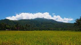 Άποψη ηφαιστείων Camiguin από τους τομείς ρυζιού απόθεμα βίντεο