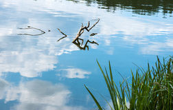 Άποψη λιμνών το καλοκαίρι Στοκ εικόνα με δικαίωμα ελεύθερης χρήσης