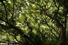 Άποψη κάτω από το δέντρο Στοκ φωτογραφία με δικαίωμα ελεύθερης χρήσης
