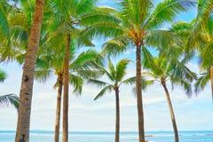 Άποψη και μπλε ουρανός φοινίκων καρύδων στην παραλία στοκ εικόνες