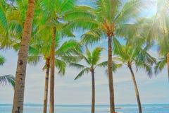 Άποψη και μπλε ουρανός φοινίκων καρύδων στην παραλία στοκ φωτογραφίες