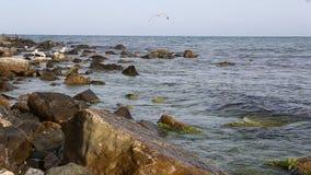 Άποψη και seagulls θάλασσας στις πέτρες απόθεμα βίντεο