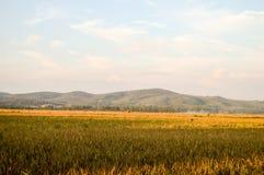 Άποψη καλλιεργήσιμου εδάφους ορυζώνα Στοκ εικόνες με δικαίωμα ελεύθερης χρήσης