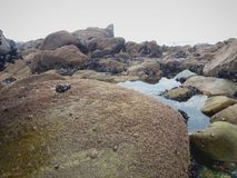 Άποψη κατά μήκος των βράχων, των αλγών, των πλασμάτων θάλασσας, χαλικιών και θάλασσας στοκ εικόνες