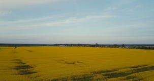 Άποψη κηφήνων οριζόντων τομέων canola άνθισης 4K Ώριμος συναπόσπορος ελαιοσπόρων ενάντια στο αγροτικό πανόραμα μπλε ουρανού Ειδυλ απόθεμα βίντεο