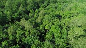 Άποψη κηφήνων του δάσους φιλμ μικρού μήκους