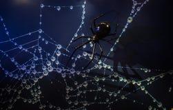 άποψη κινηματογραφήσεων σε πρώτο πλάνο ενός προτύπου αραχνών στο σκοτεινό γαλαζωπό υπόβαθρο, αράχνη καθαρή με τα σταγονίδια νερού στοκ φωτογραφία