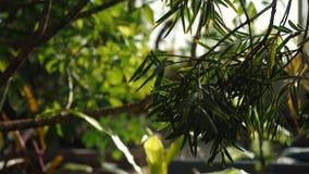 Άποψη κινηματογραφήσεων σε πρώτο πλάνο μερικών εξωτικών φυτού και φύλλων του τροπικού δάσους σε έναν βοτανικό κήπο Μήκος σε πόδηα απόθεμα βίντεο