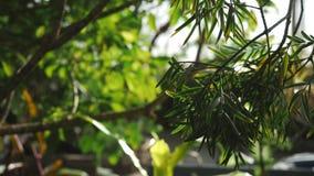 Άποψη κινηματογραφήσεων σε πρώτο πλάνο μερικών εξωτικών φυτού και φύλλων του τροπικού δάσους σε έναν βοτανικό κήπο Μήκος σε πόδηα φιλμ μικρού μήκους