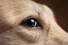 Άποψη κινηματογραφήσεων σε πρώτο πλάνο στα πόδια του σκυλιού στο στούντιο στο καφετί υπόβαθρο με το διάστημα αντιγράφων στοκ φωτογραφίες με δικαίωμα ελεύθερης χρήσης