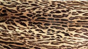 Άποψη κινηματογραφήσεων σε πρώτο πλάνο του δέρματος μιας λεοπάρδαλης στοκ εικόνες
