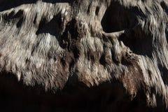 Άποψη κινηματογραφήσεων σε πρώτο πλάνο του ξύλου με το έντονο σιτάρι, σύσταση υποβάθρου στοκ φωτογραφία με δικαίωμα ελεύθερης χρήσης